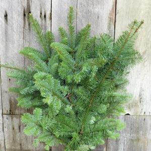 christmas-greens-ahner-greenhouse